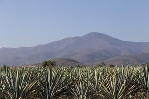 LibDib Blog Post Mezcal Tequila 1-6-20-1